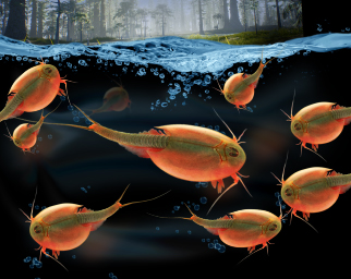 Prehistoric Sea Creatures